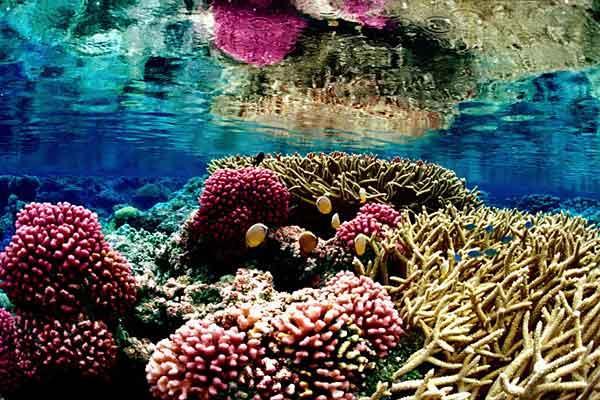 Palmyra Reef (FWS)